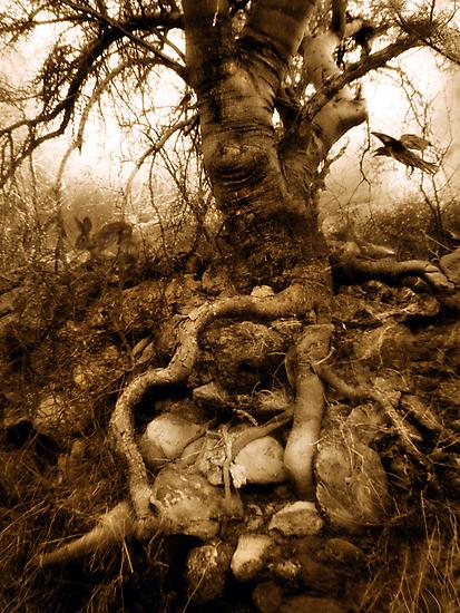 Stone Gaia by Elena Ray