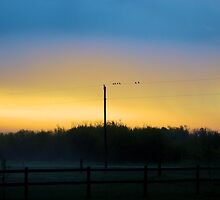Birds On A Wire by kari