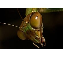 Mantis Head Photographic Print