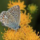 Butterfly by Irina777
