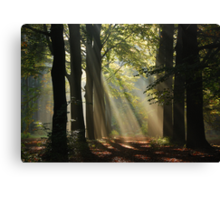 In the enchanted forest Canvas Print