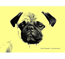 mops puppy yellow - french bulldog, funny, cute, love Photographic Print