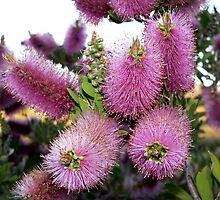 Purple Bottle Brush by Bouzov