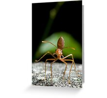 Tapdancer Greeting Card
