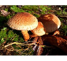 Toasty Warm Coloured Fungi Photographic Print