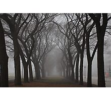 Columns of Trees in the Fog Photographic Print