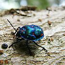 Colourful bug by msflip