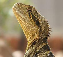 Always alert - Eastern Water Dragon by Steve Bullock
