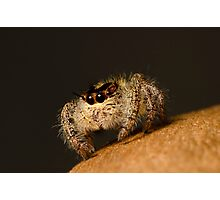 Jumping Spider Photographic Print