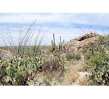 Desert Mounds Photographic Print