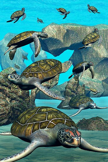 Turtle Bay by Lisa  Weber