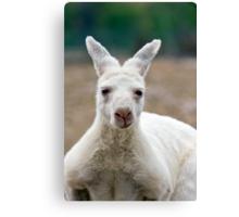 What do you mean I'm white! Aren't all Kangaroos white? Canvas Print