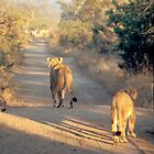 Lions in the dawn by sasjacobs
