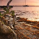 Sargasso Weed and Buttonwood at Sunrise with Sailboat behind by Lucy Hollis