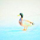 Darling duck by ♥⊱ B. Randi Bailey