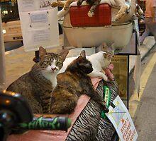 Kuala Lumpur Moped Cats 3 by ApeArt