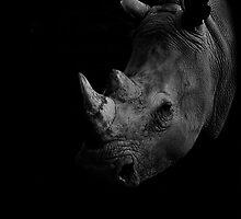 Rhino in BW (low key) by Flemming Jacobsen