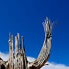 Saguaro Skeleton by Brad Sauter