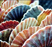 scallop shells by RoelfKlap