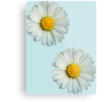 Two white daisies Metal Print