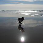 Dog at the Beach by Timoteo Delgado