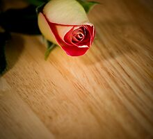 The Rose by doorfrontphotos