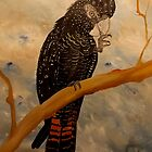 Red Tail Black Cockatoo by jansimpressions