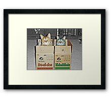 Free Shipping Framed Print