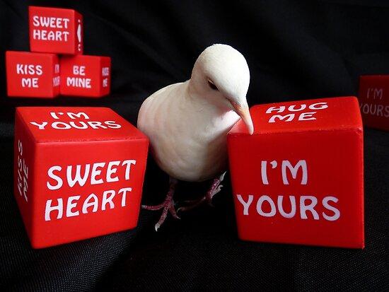 I'm A Love-A-Dove - White Collard Dove - NZ by AndreaEL