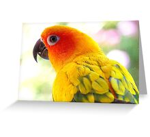 Surly! Not another Photo! - Sun Conure - NZ Greeting Card