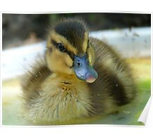 I Am Dinky Duck - Mallard Duckling - NZ Poster