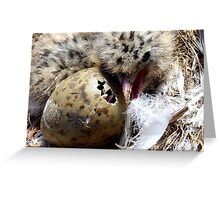 Come on Pip, You Can Do It, I Did It! - Baby Seagull Hatching! - NZ Greeting Card
