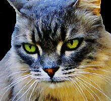 Intense Kitty Cat by Swede