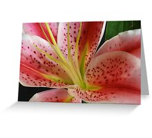 Lily... Greeting Card