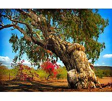 Ancient Paperbark Tree Photographic Print