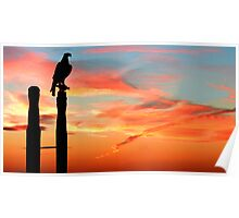 Perched Eagle at Sunset Poster
