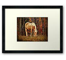 Buckskin Horse in Autumn Framed Print