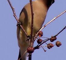 Cedar Waxwings by Rpnzle