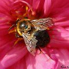 Macro - Bee by Rina  Kupfer