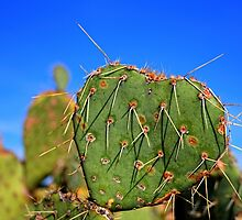 Long Needle Prickly Pear by Roger Passman