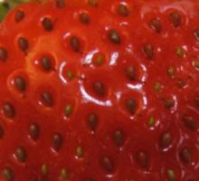 Strawberry T Sticker
