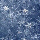 snow flakes- this is right out of the camera by conilouz