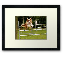 I Believe I Can Fly... I Believe... - Border Collie - NZ Framed Print