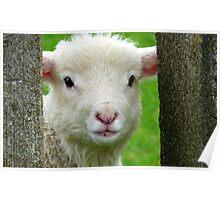 Hi Bubbler's - Lamb - NZ - Southland Poster