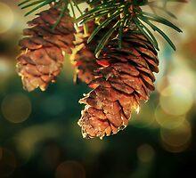 Pineconesinthesun by CherylCooper
