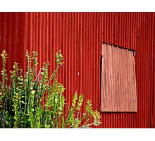 Fred's Red Shed Photographic Print