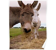 Hay... You Wanna Try Some!!! - Donkeys - NZ Poster