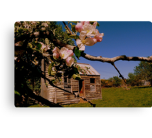 The lonely Apple Tree! - Old House - NZ - Southalnd Canvas Print