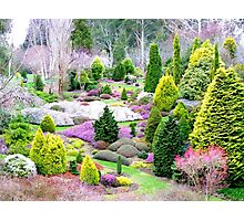 A Glympse Of Fairy Land ... Conifers Maple Glen - NZ Photographic Print