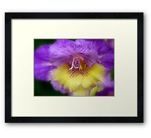 Splendid Beauty! - Gladiolus Flower - Gore NZ Framed Print